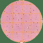 Общие колиформные бактерии (ОКБ)